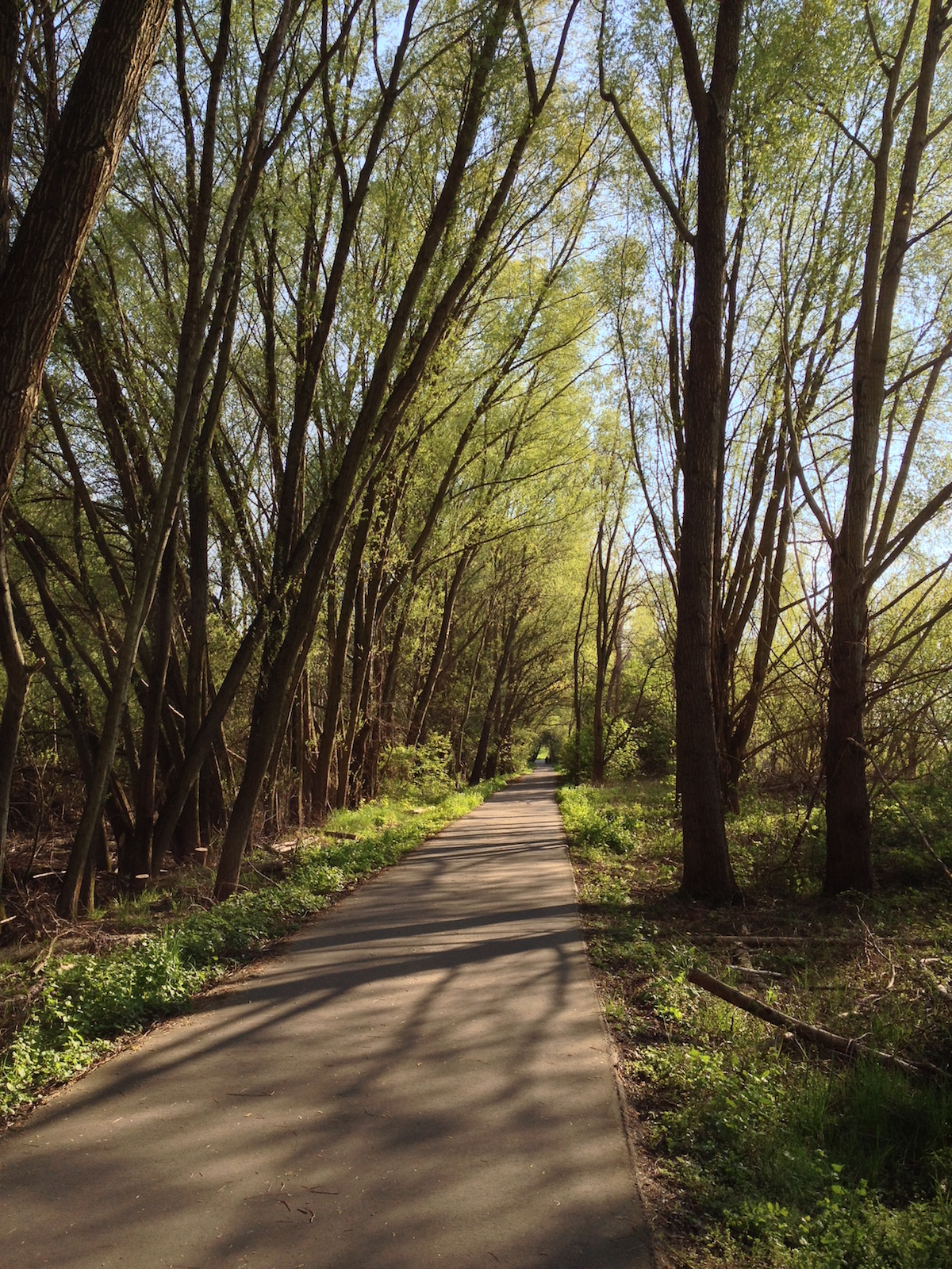Langer, leerer Radweg im Wald
