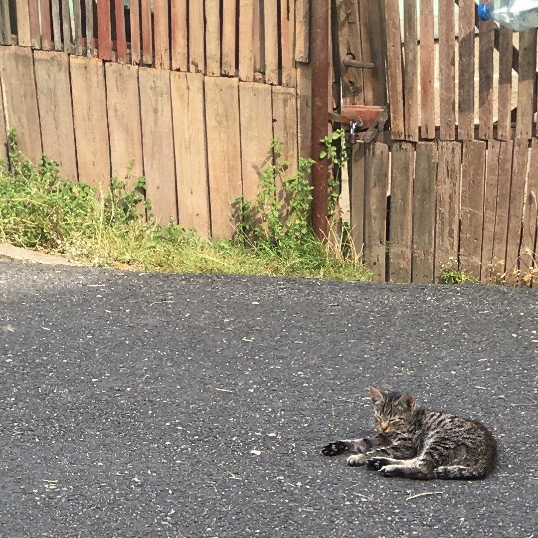 Katze auf der Fahrbahn