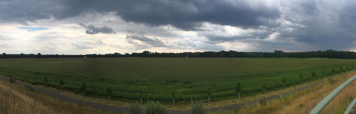 Unfassbar großes Maisfeld