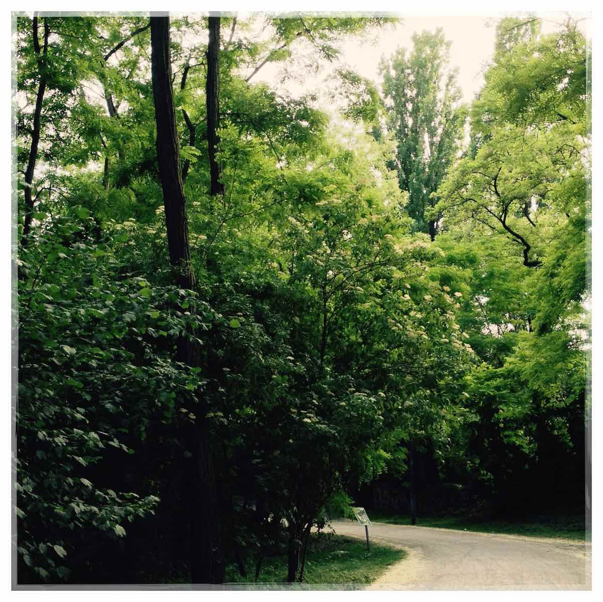 Wald am Anhalter Bahnhof